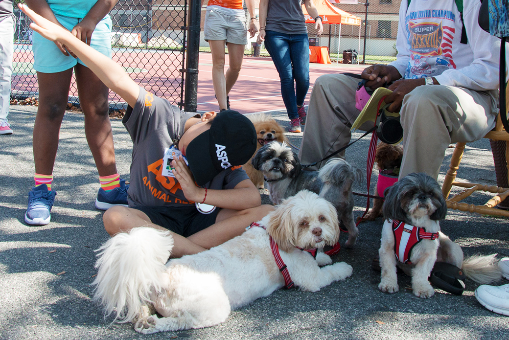Mateo has some fun with a few local four-legged friends.