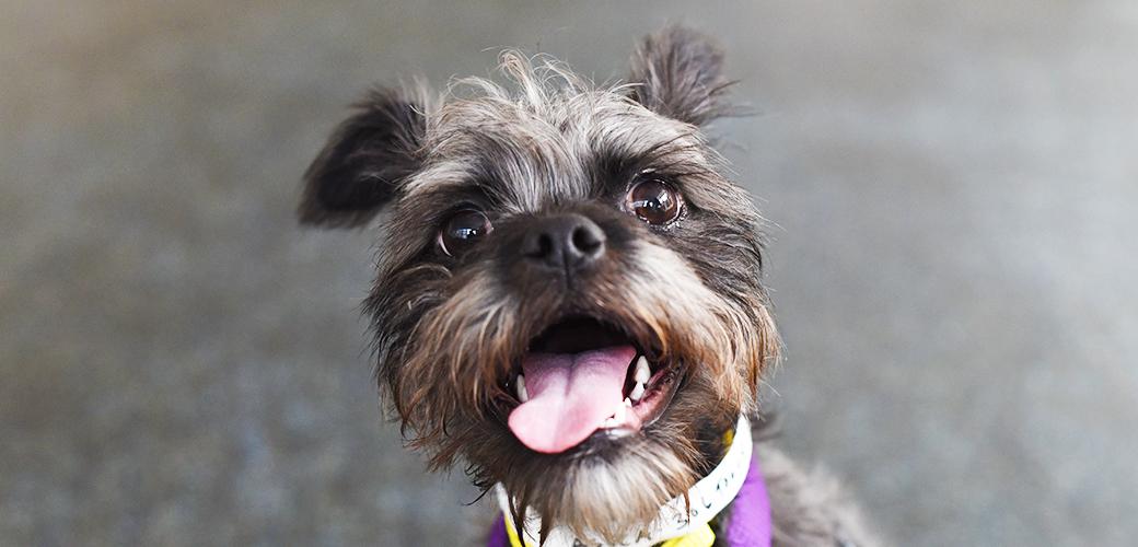 Mayor de Blasio Provides Critical Funding to NYC Animal Shelters