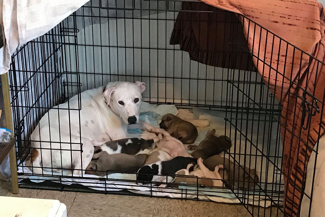 Sheila feeding her puppies