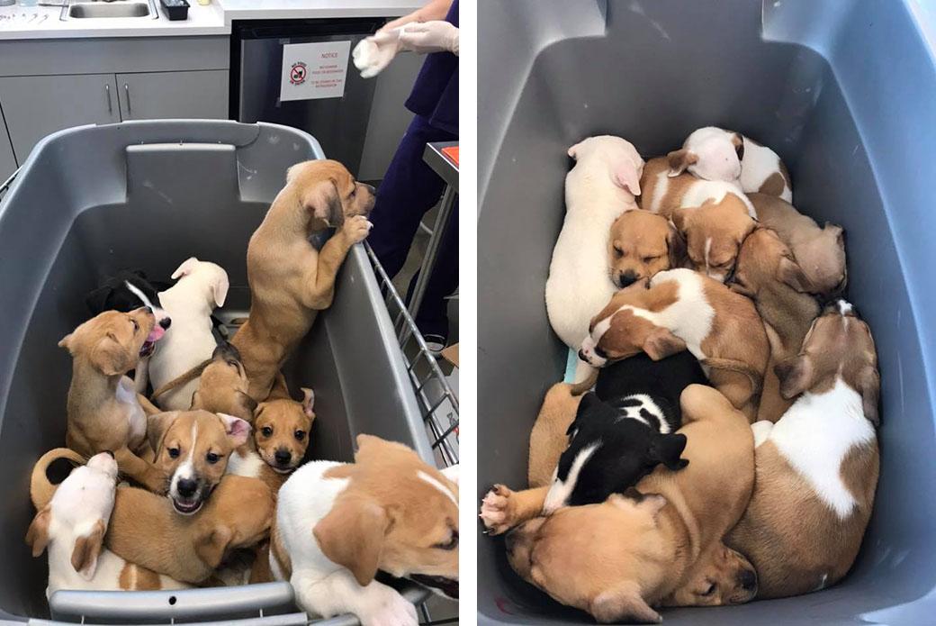 Sheila's puppies