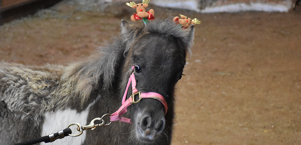 a mini horse with reindeer on its head