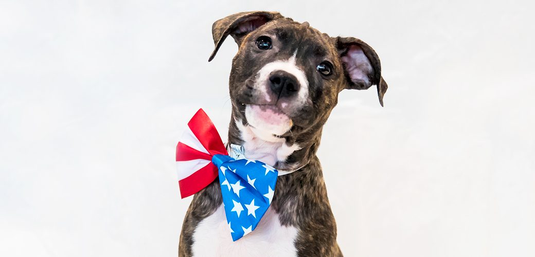 a dog with an american flag bow