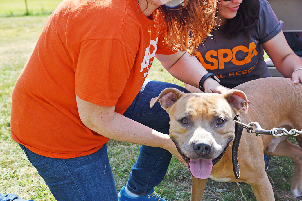Tanya Perry's dog, Prince Perry, with ASPCA staff