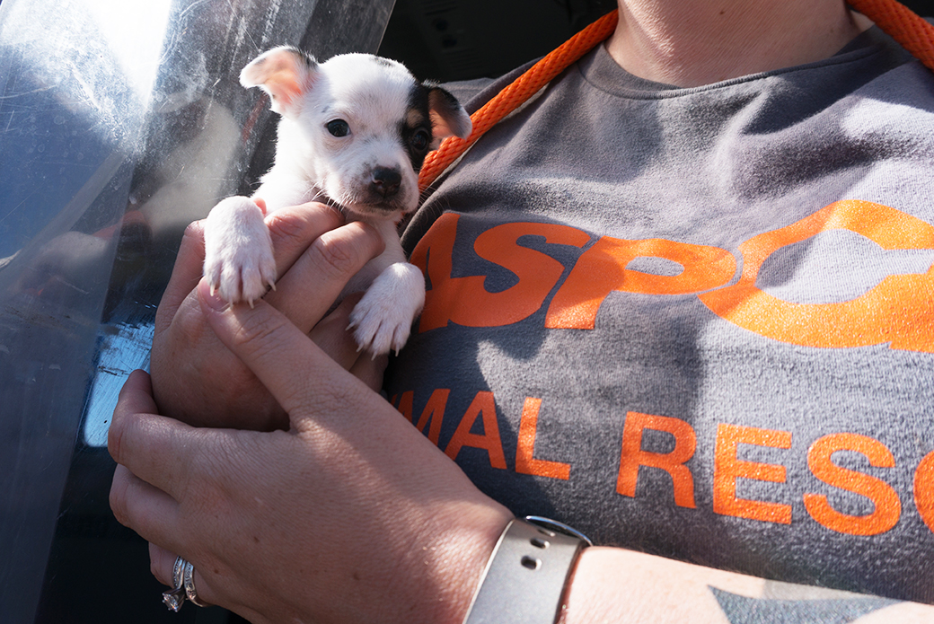 volunteer holding rescued puppy