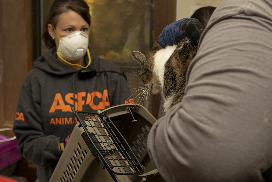 aspca responders placing a rescued cat in a carrier