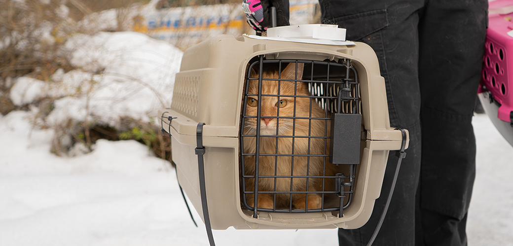 a rescued cat in a carrier