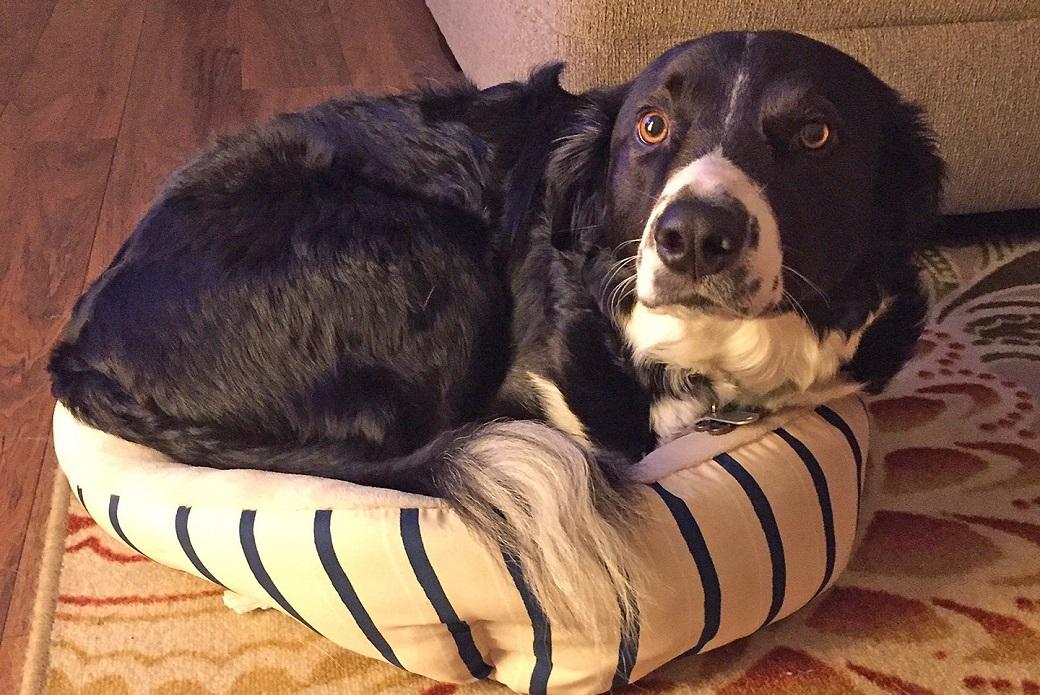 Haggis on his bed