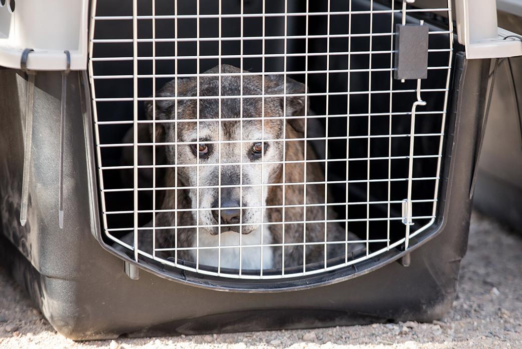 a rescued dog in a crate