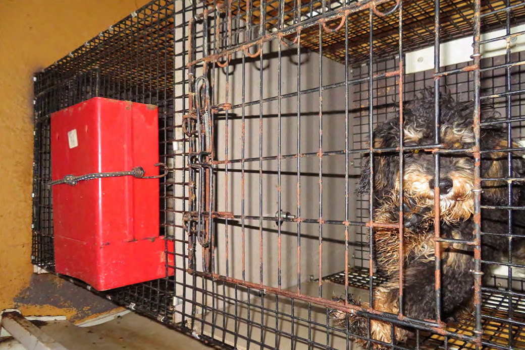 a dog in a rusty cage