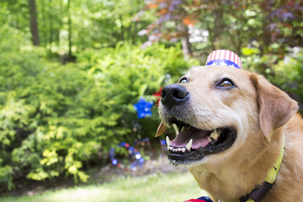 a dog with an american flag hat