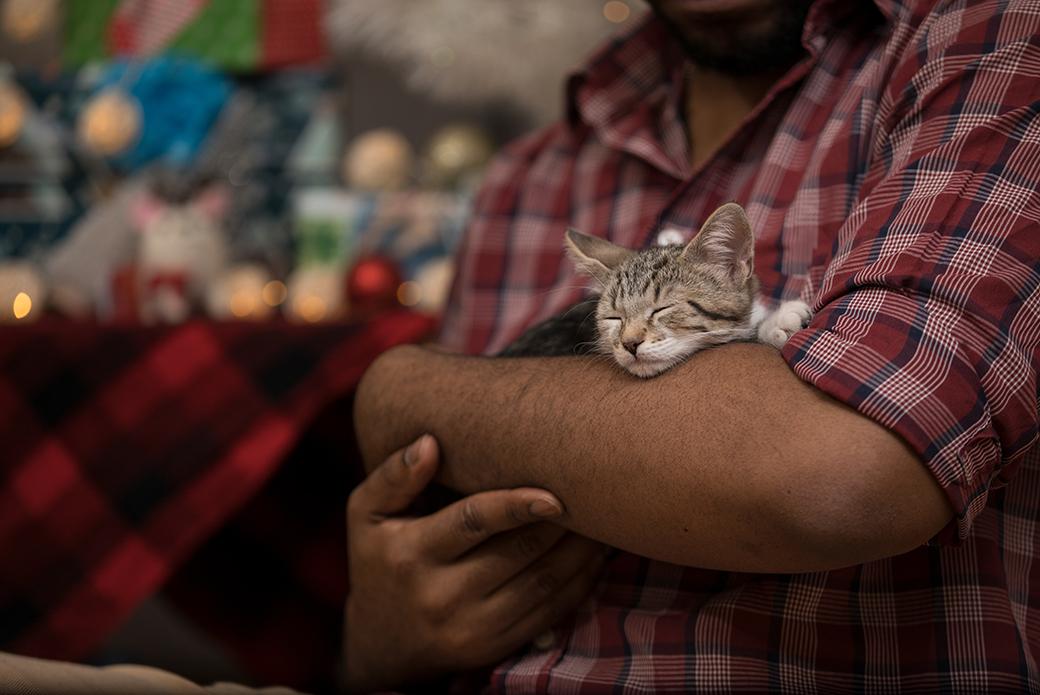 a sleeping cat being held