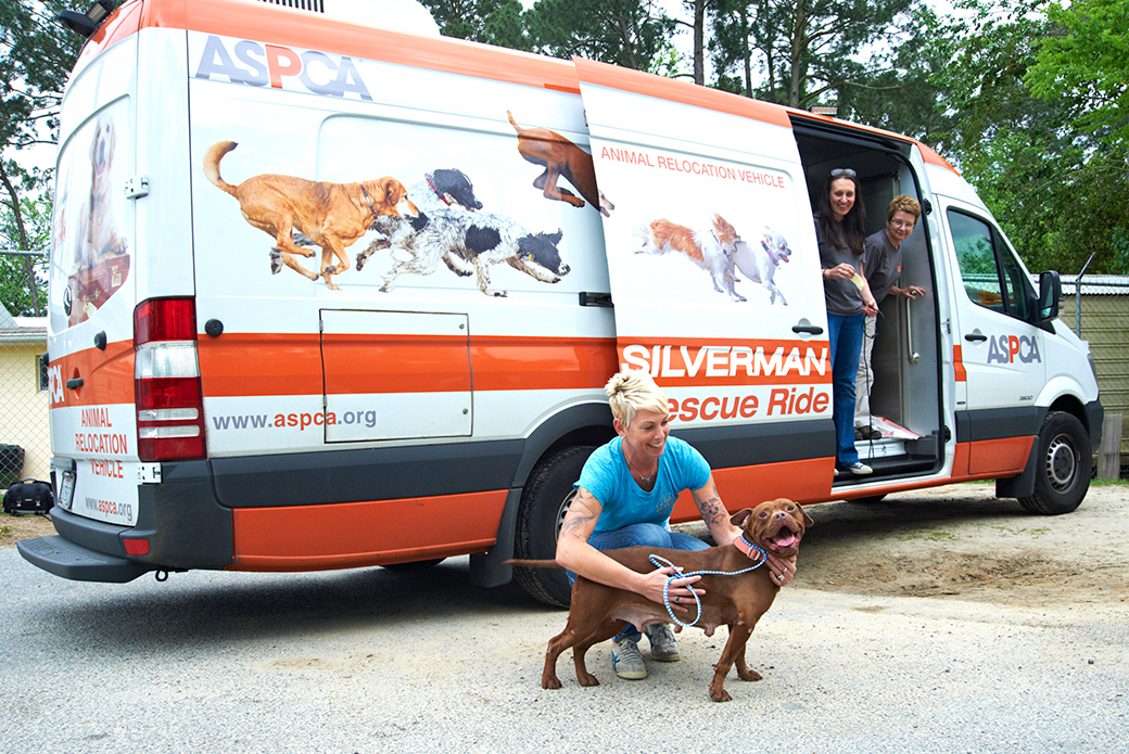 Nancy Silverman rescue ride van with a dog outside being pet by a woman in a blue shirt