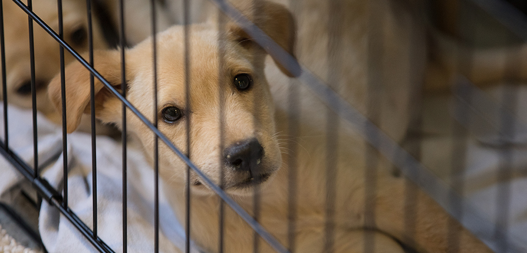 a puppy in a cage