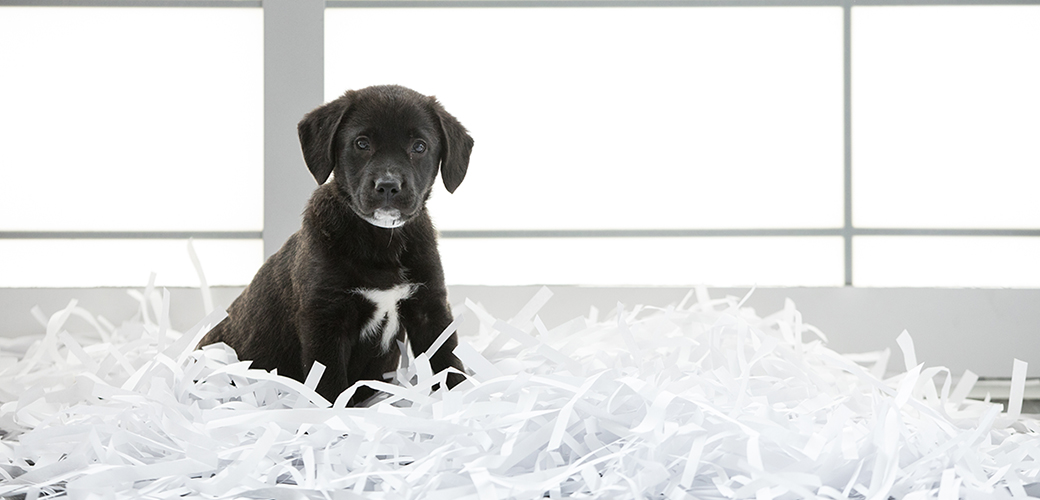 New York Poised to Become Third State to Ban the Sale of Puppies in