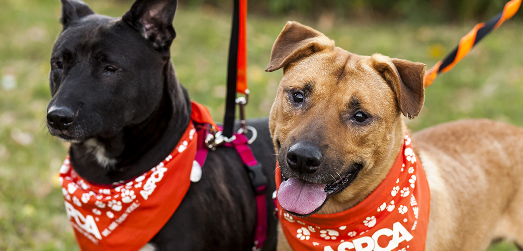 two dogs wearing aspca bandanas