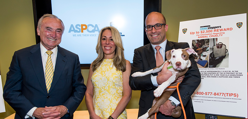 NYC's New Crime-Stopping Approach to Animal Cruelty