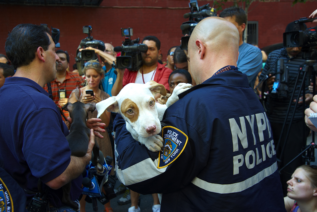 a young dog being held by NYPD officer