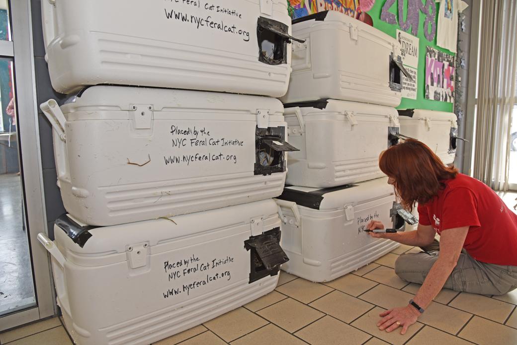 Kathleen O'Malley finishing the cat shelters