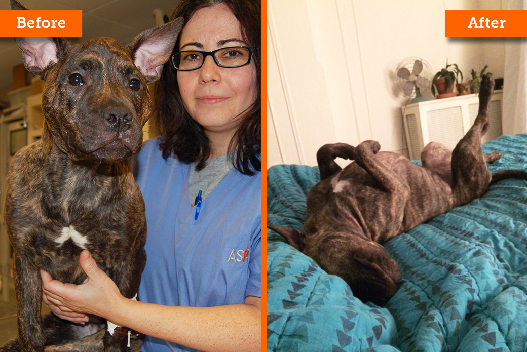 NYPD & ASPCA: Meet Some Adorable Animals Rescued Last Year