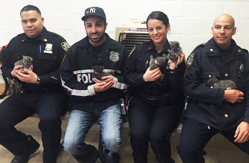 NYPD Rescues Kittens Abandoned in Suitcase in Brooklyn