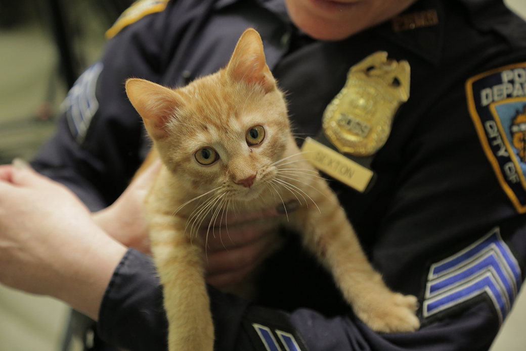 nypd officer hold a cat