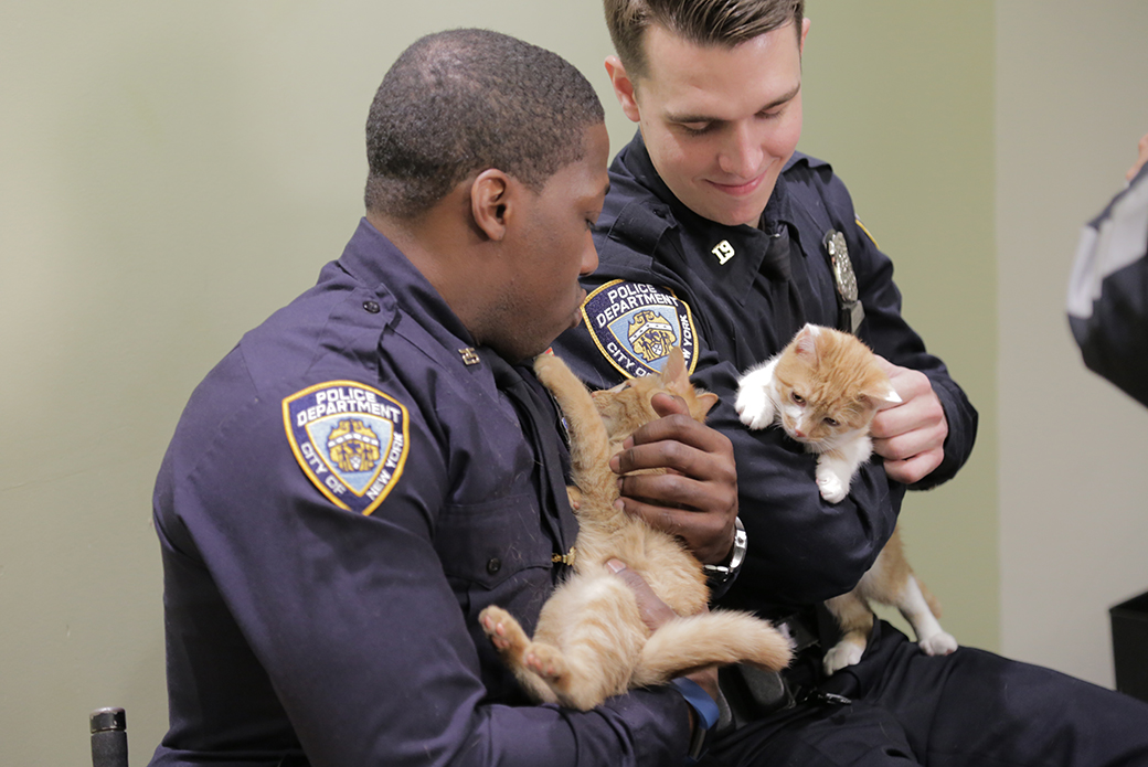 two nypd officers holding cats