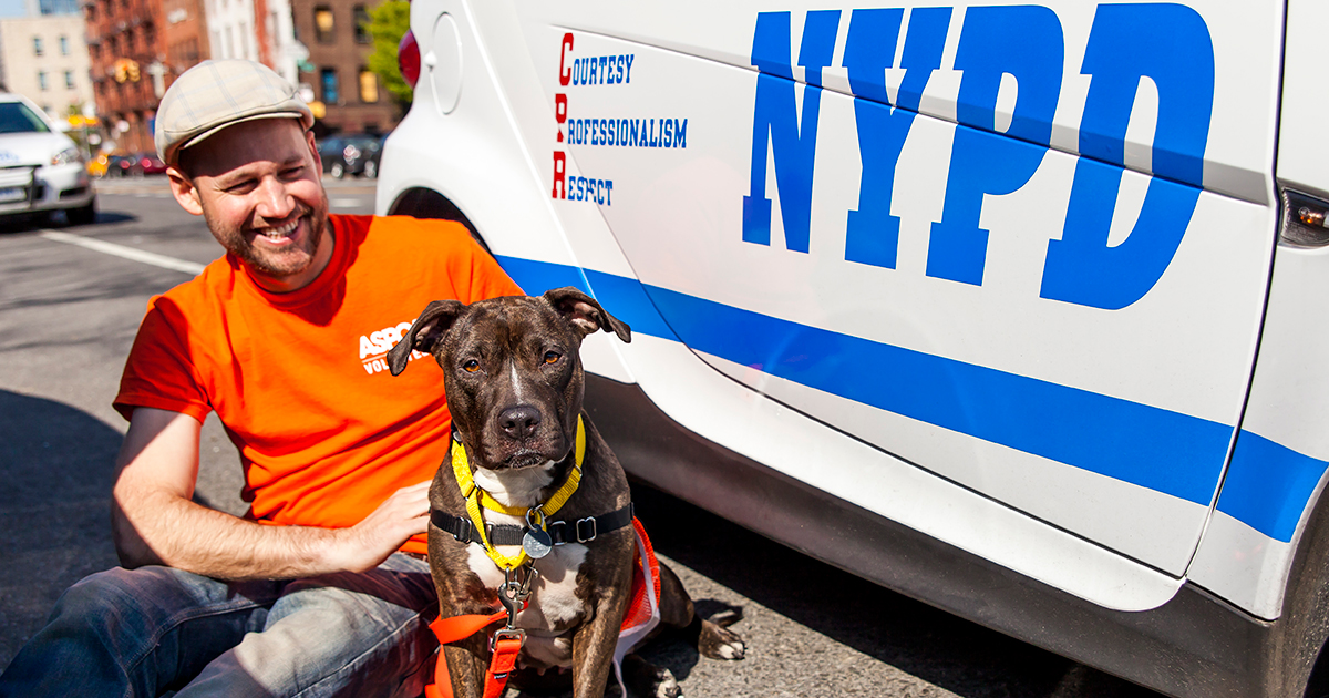 A Milestone for Animals: The ASPCA Has Treated 1,000 Animal Cruelty Victims since Launching Partnership with NYPD