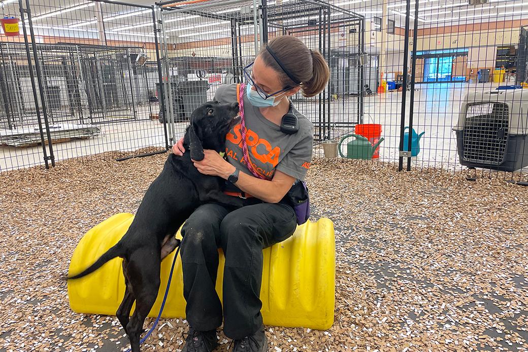 an ASPCA responder petting a rescued dog