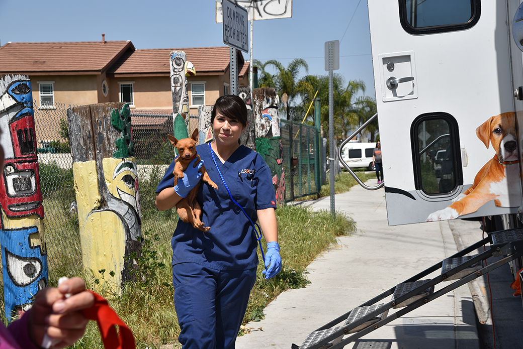 ASPCA veterinarian carrying a dog