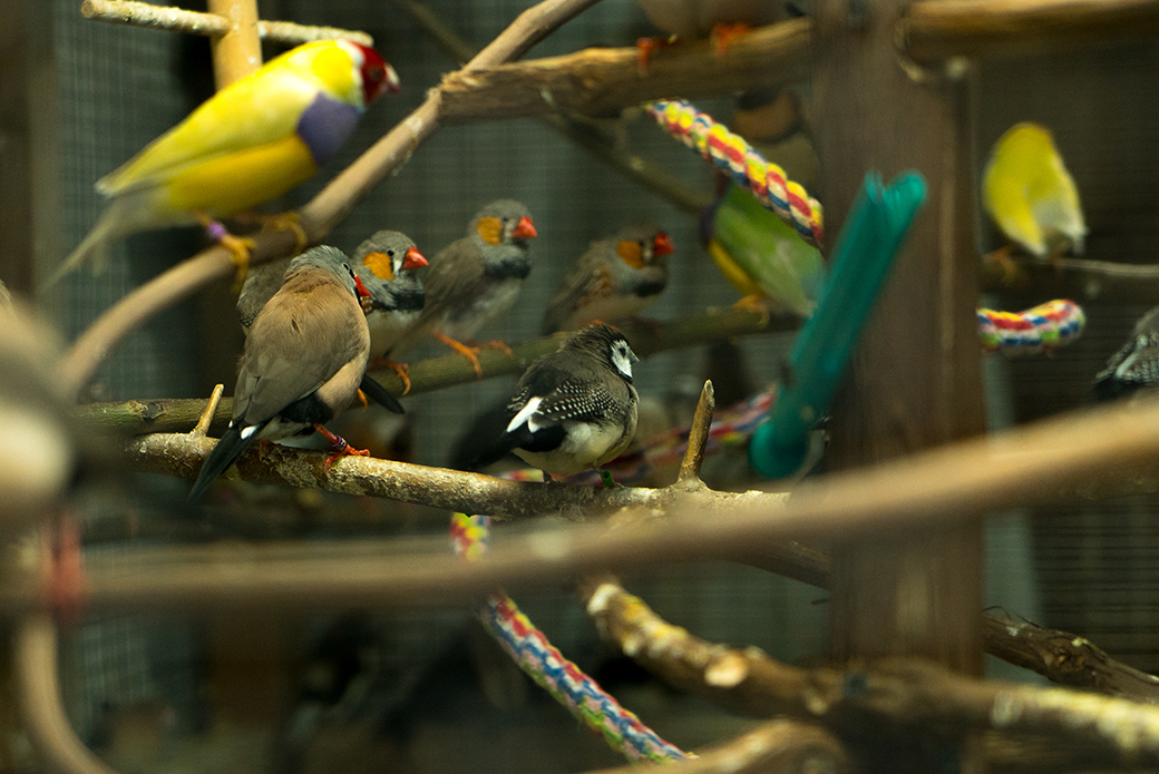 a group of birds found in a hoarding situation