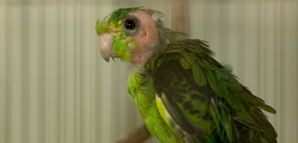 a rescued green bird