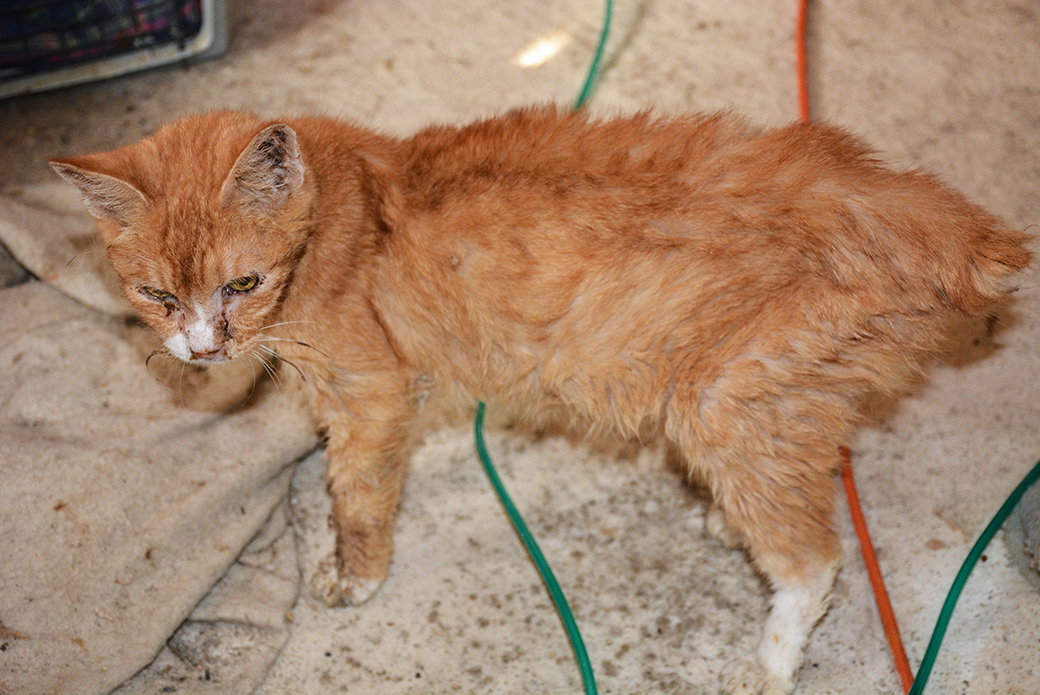 ASPCA Rescues Nearly 50 Cats in Oklahoma