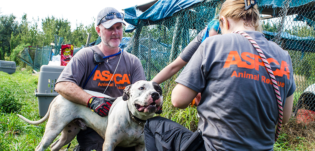 One Step Closer to Adoption: ASPCA Transport Vehicle Sets Out to Deliver Dogs to Animal Welfare Organizations in 15 States