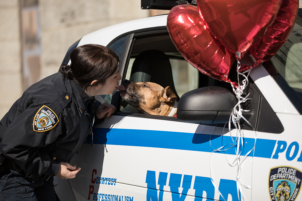 Orson in a nypd vehicle