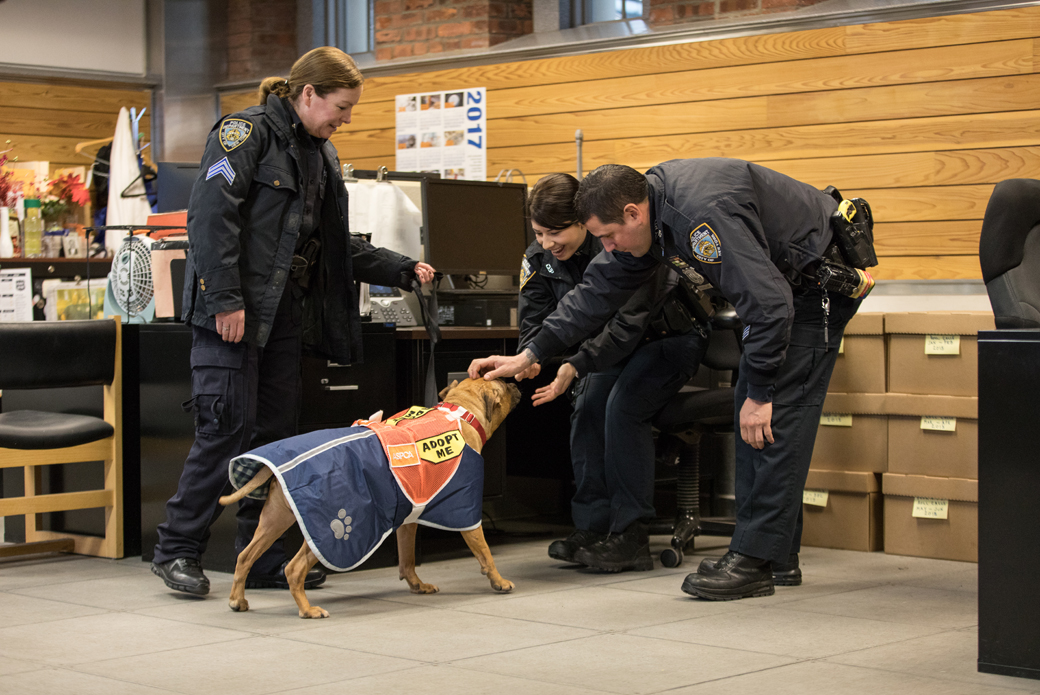 Orson getting pet by two nypd officers