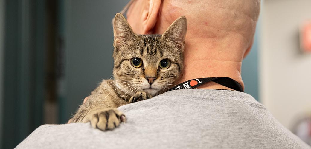 a cat looking over a man's shoulder