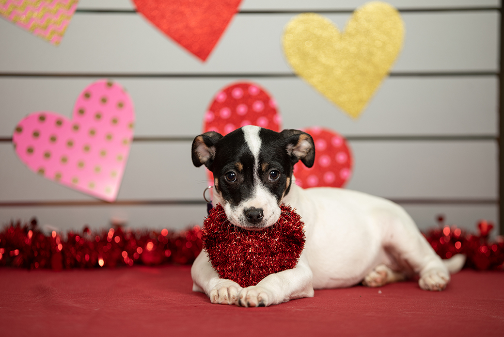 a puppy with valentines day decorations