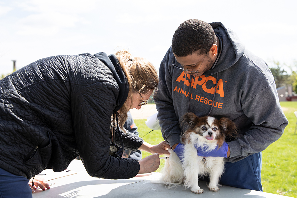 a dog getting a vaccine