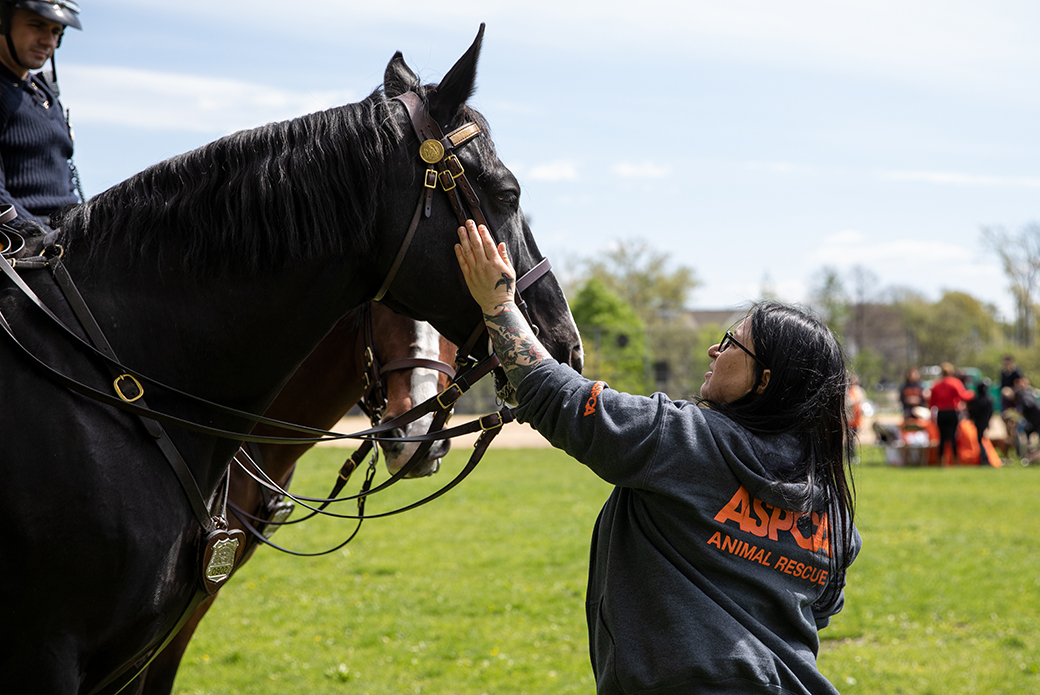 an ASPCA volunteer touching a police horse