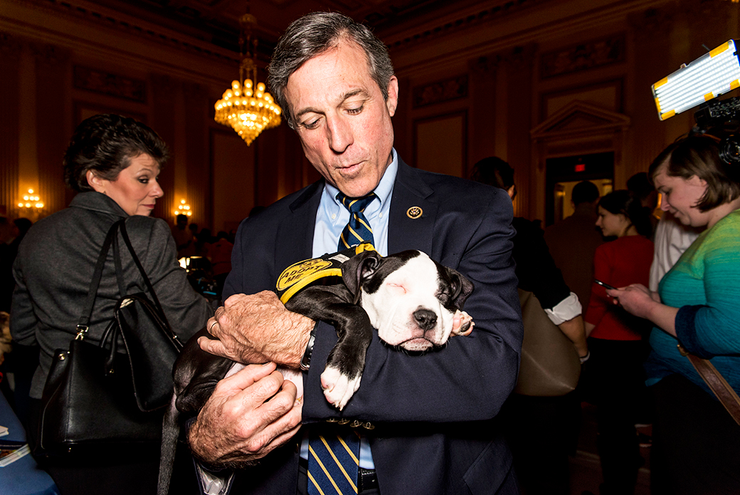 Puppy Love Is in the Air on Capitol Hill