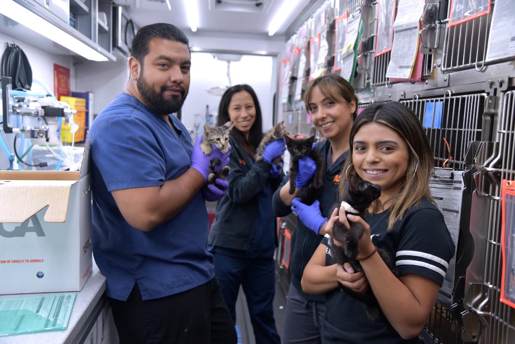 ASPCA staff holding kittens