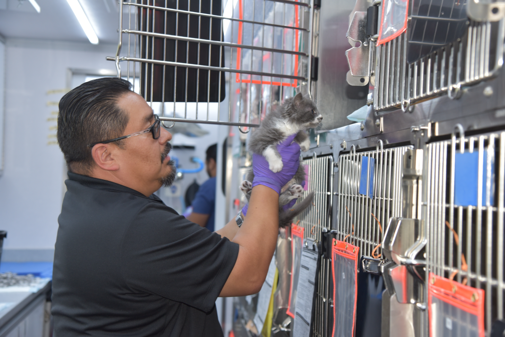 ASPCA staff placing kitten in a crate