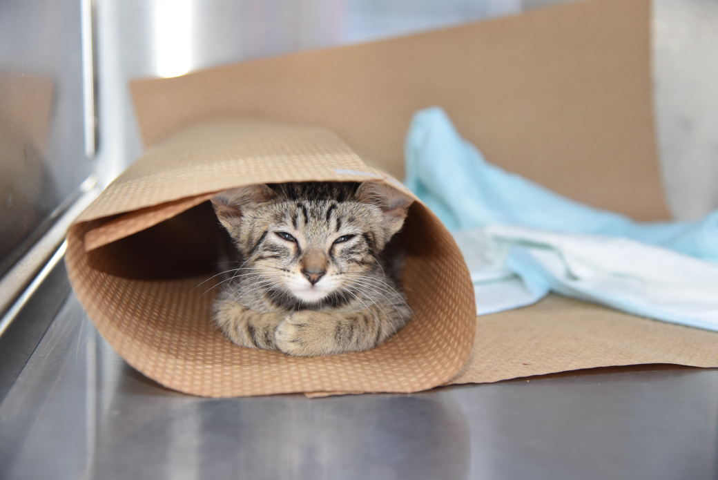 a kitten in a rolled up mat