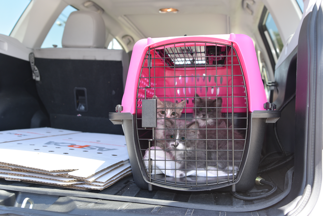 three kittens in a crate being transported