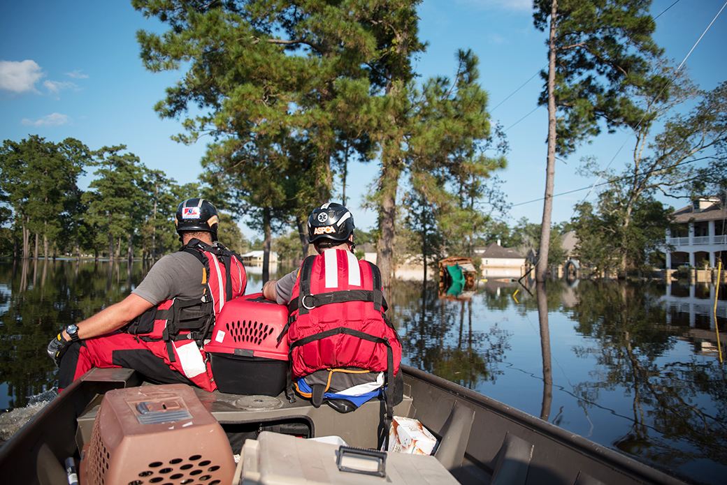 The ASPCA disaster response team taking boats around flooded suburban areas