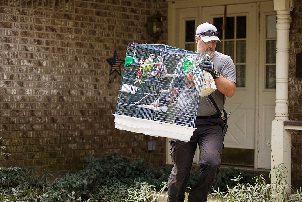 aspca responder carrying birds out of a house