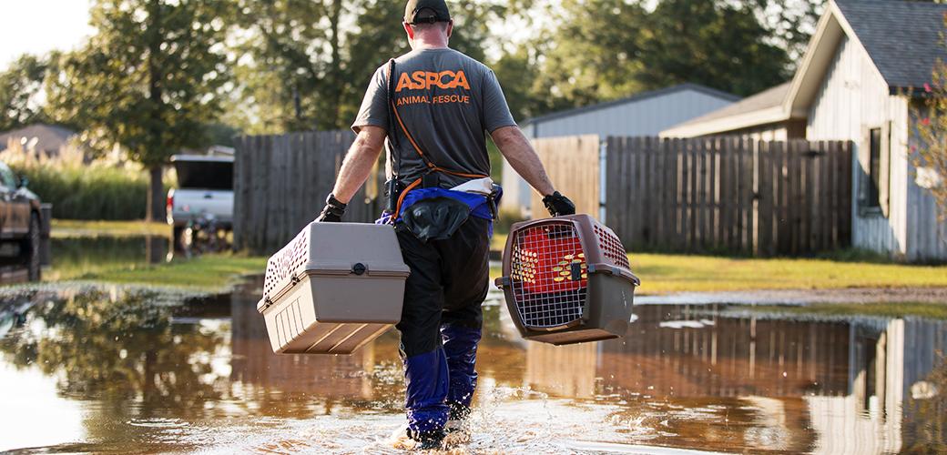ASPCA responder carrying pet carriers