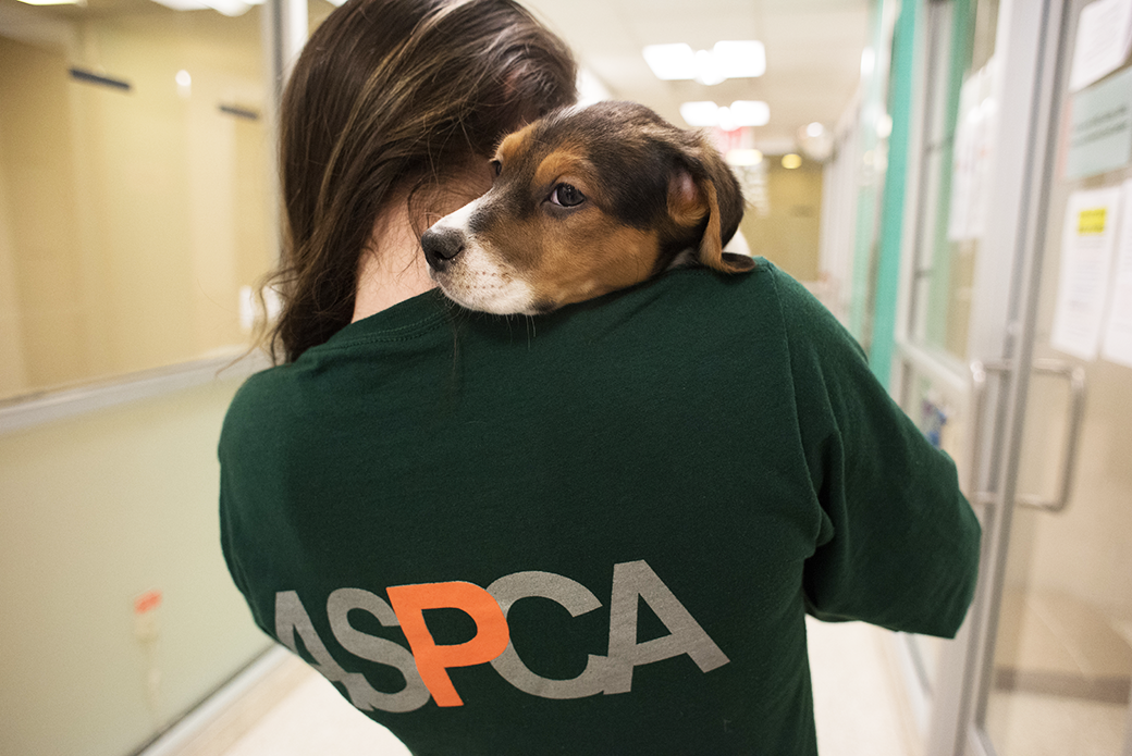 ASPCA volunteer holding a dog