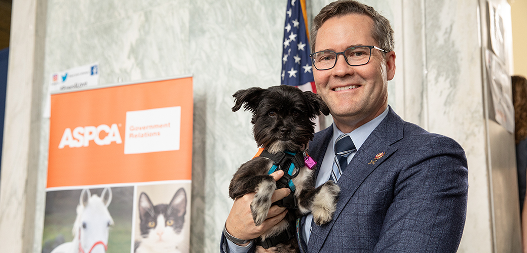 a dog and a lawmaker