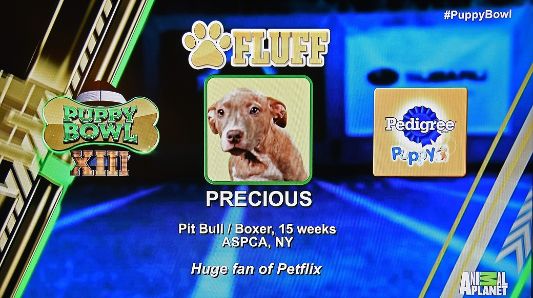 Precious in Puppy Bowl XIII